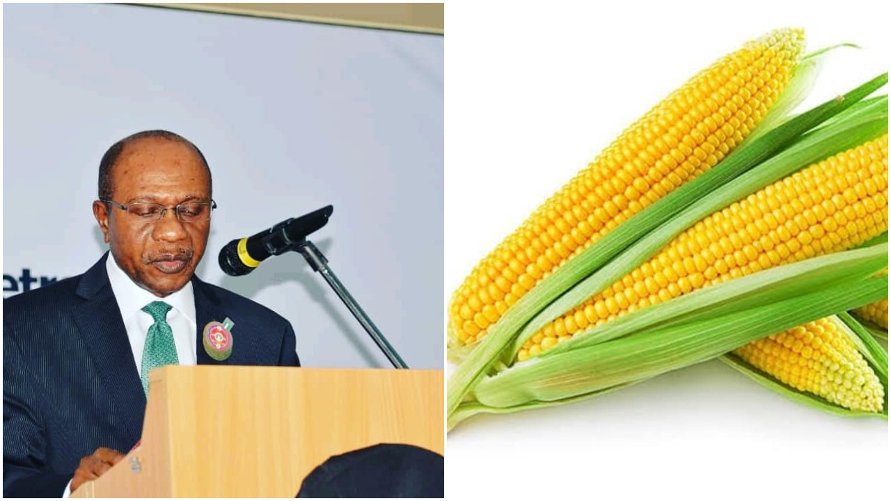 Central Bank of Nigeria bans the importation of maize (photo)